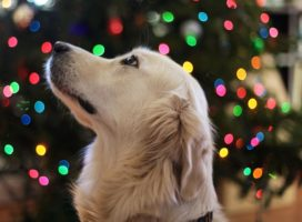Keppie's Korner Exclusive- Holiday Pet Safety